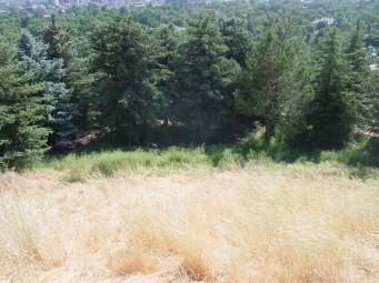 backyard with weeds