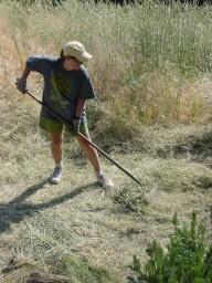 shelley raking