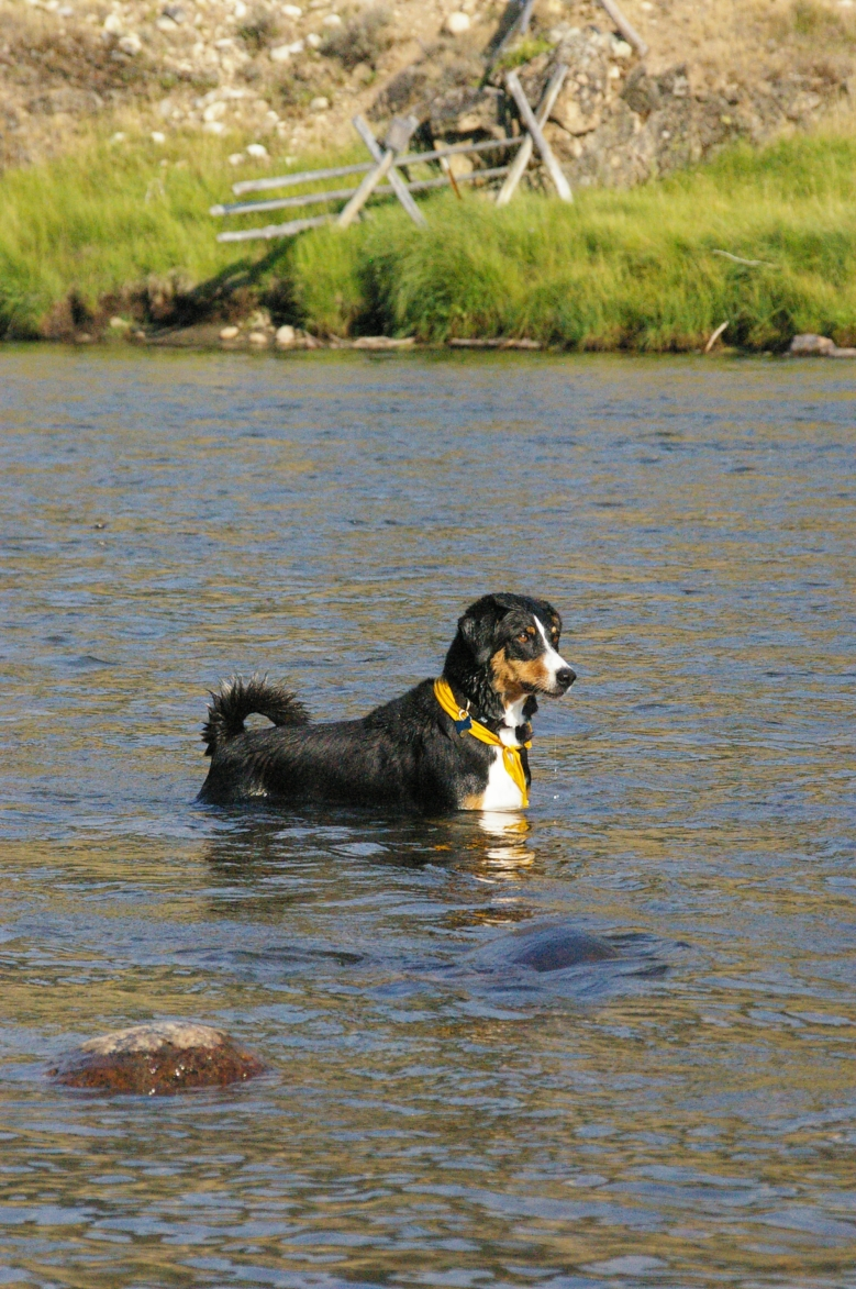 ripley in the river