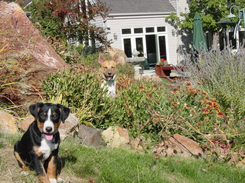 two dogs in backyard, 2002
